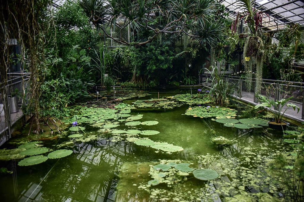 Foto-Kurs im Botanischen Garten am Freitag
